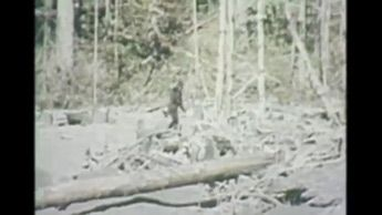 The Bigfoot Tapes 01