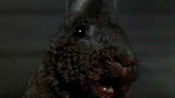 Night Of The Lepus 07